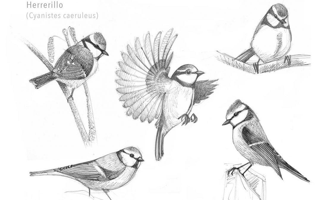 Bocetos de aves